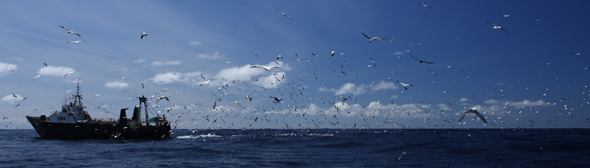 trawler and tons of birds