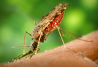 UCT researchers identify a potent anti-malarial candidate